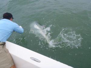 Naples Saltwater Fishing - Fishing 13