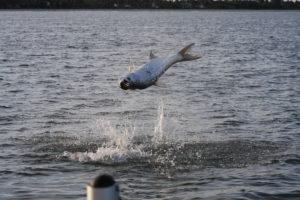 Naples Saltwater Fishing - Fishing 41