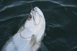 Naples Saltwater Fishing - Fishing 42
