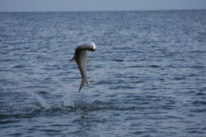 Naples Saltwater Fishing - Fishing 44