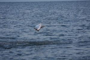 Naples Saltwater Fishing - Fishing 45