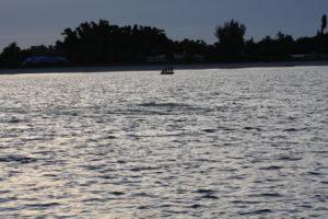 Naples Saltwater Fishing - Fishing 46