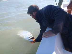 Naples Saltwater Fishing - Fishing 26