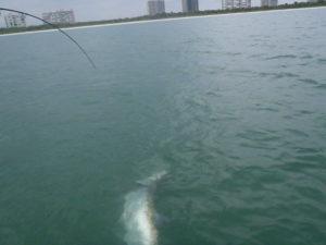 Naples Saltwater Fishing - Fishing 32